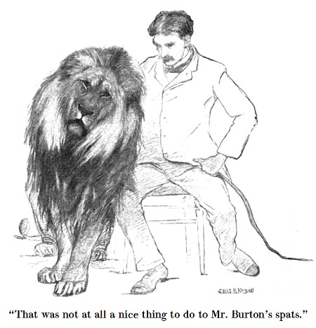 illustrated-edition-lion-spats
