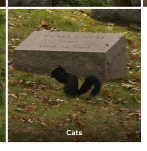 Google-Cats-2